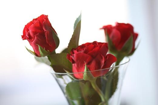 roses-842036_1280
