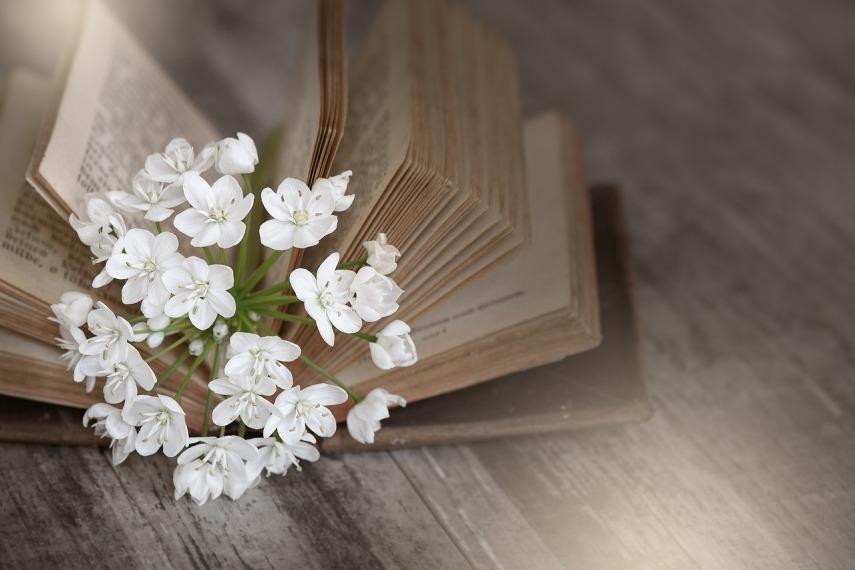 book-1356337_1280-1
