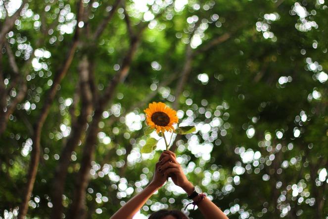 flower-1245700_1920